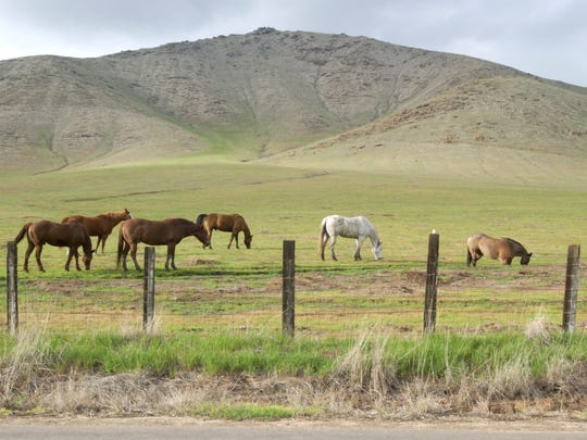 Horses graze in a field along Yokohl Drive in Yokohl