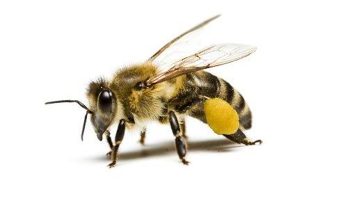 Master Gardener Lecture - Bees:2 p.m. May 25. Lakewood Park Library, 7605 Santa Barbara Drive, Fort Pierce. 772-462-6870; library.stlucieco.gov.