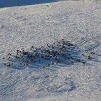 Shoulder elk hunting season begins in the green areas on Monday.
