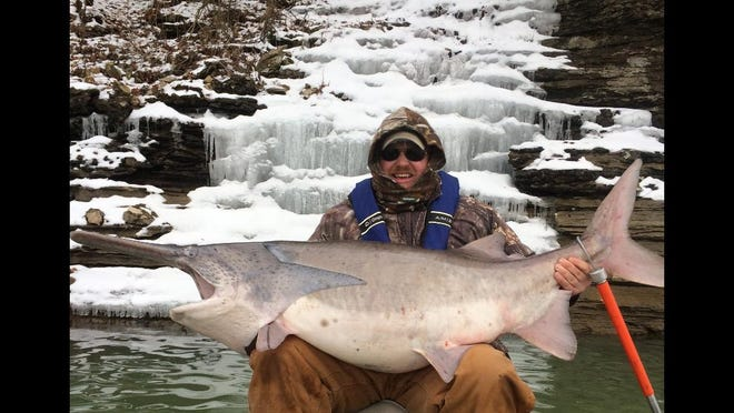 Arkansas has paddlefish, too. Jesse Wilkes of Springdale, Ark. snagged this state-record 105-pounder last March at Beaver Lake.