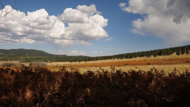 An easy, 2-mile trail winds through Wilson Meadow north of Flagstaff.