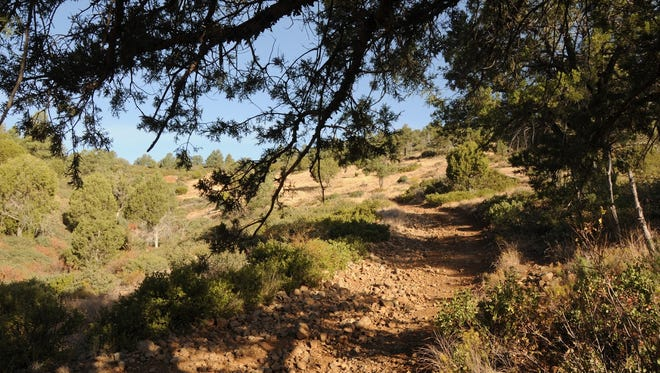 The American Gulch South Trail in Payson is shaded by junipers.