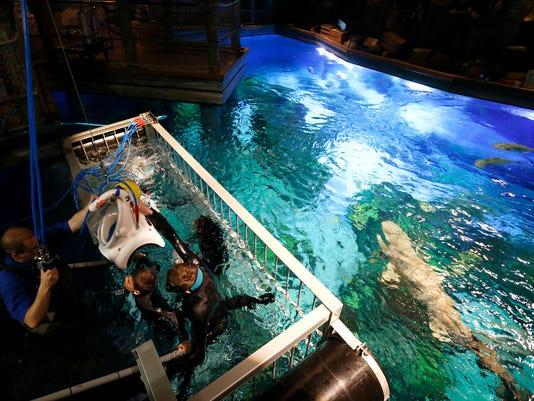 636632089322634570-tWow-diving00027.jpg