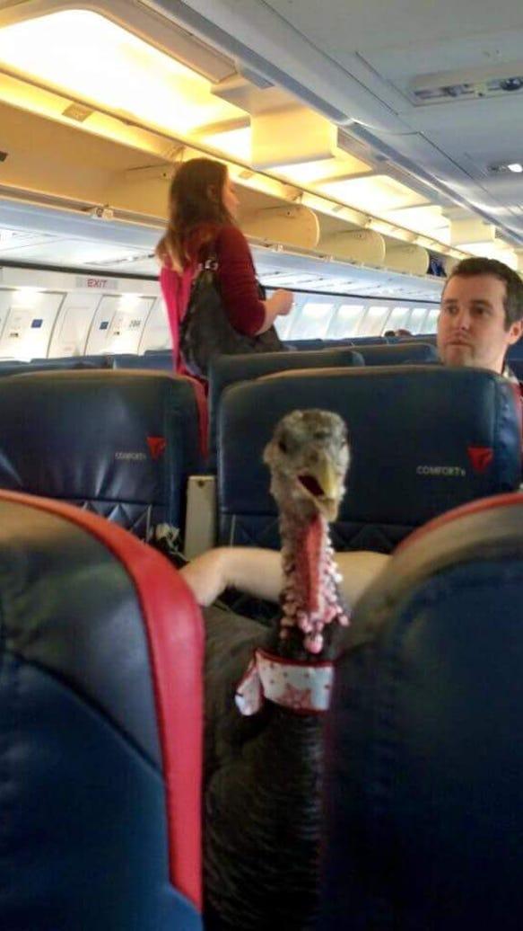 Turkey on plane