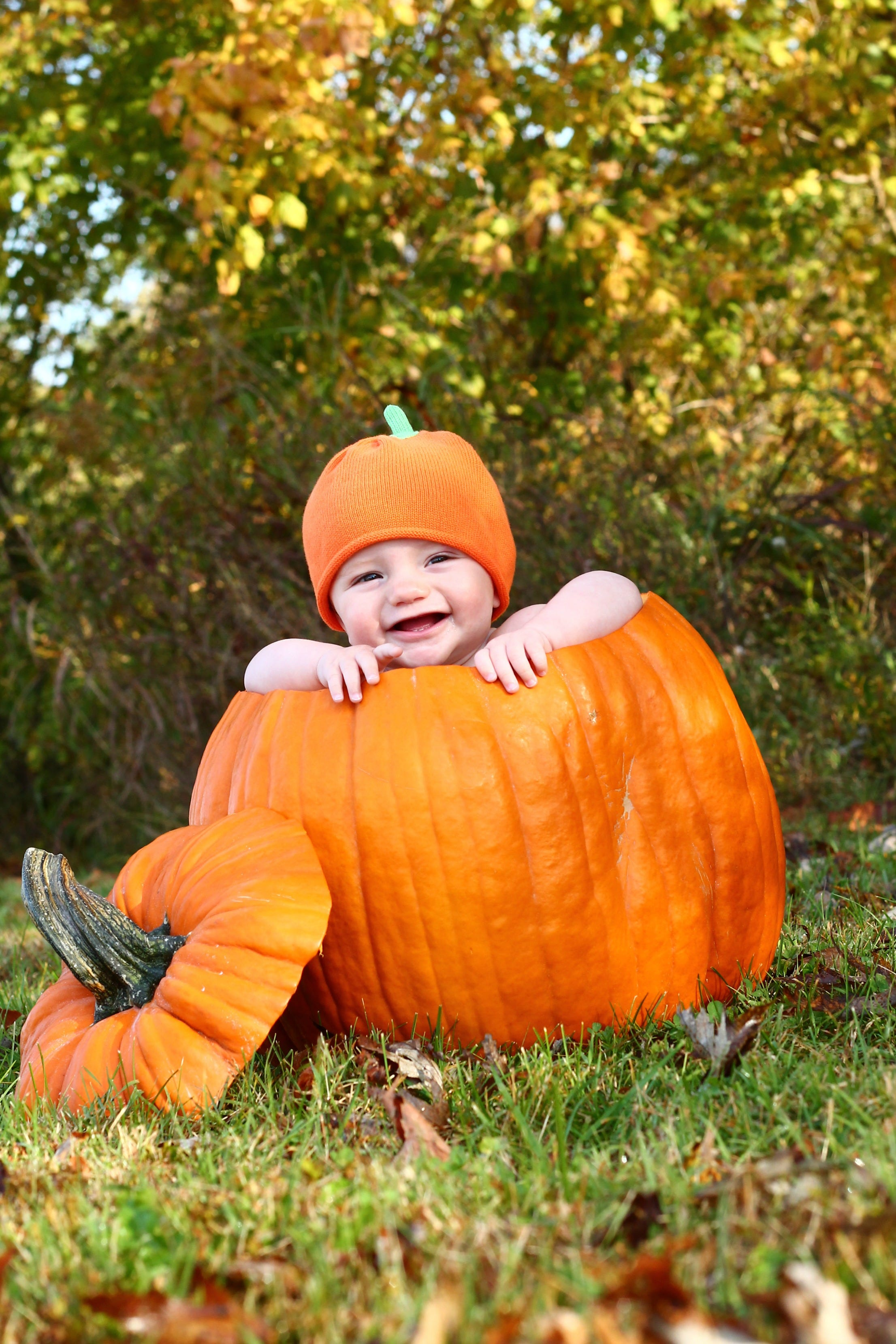 Watch 10 Photos of Babies in Pumpkins That Are Too Pure for Words video