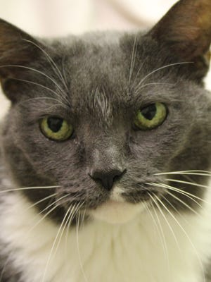 Emma has been waiting at the Oshkosh Area Humane Society since March for her forever home.
