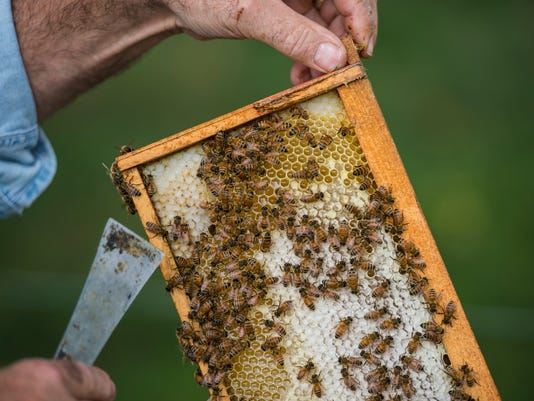 1-LDN-JML-081116-martin-bees