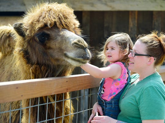 Guests are encouraged to get up close to many of the animals at Animal Adventure Park.