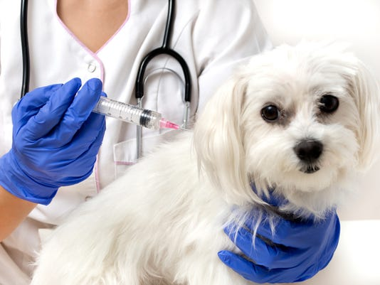 Dog vaccinated by veterinarian