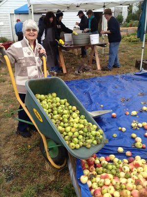 Event organizer JoAnn King delivers another wheelbarrow of apples during a past Apple Festival at the Historic Brunk House.