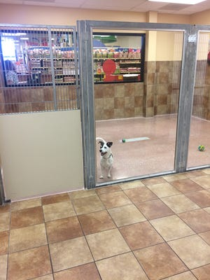 Fox Valley Humane Association is now adopting cats and dogs from  the new Everyday Adoption Center at PetSmart in Ashwaubenon.