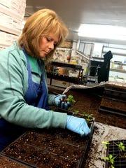 Ann Jonasen plants pepper seedlings at the Flower Farm.