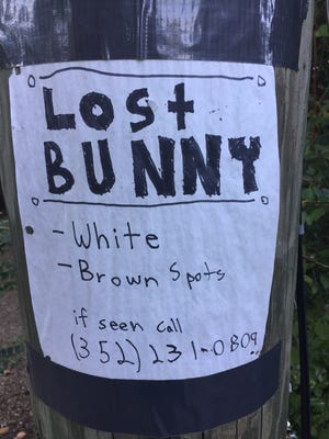 A stray bunny has been seen in Levy Park and a concerned neighbor is trying to catch the rabbit.