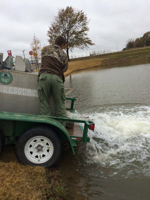 Patrick Cox stocks winter trout at Shelby Farms