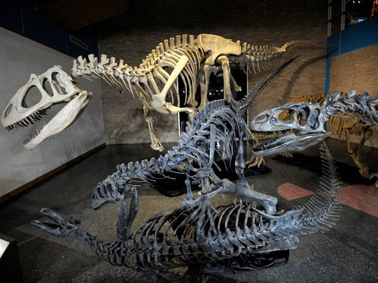 "The ""Fossil Giants: Dinosaurs and Mammals."" exhibit continues at the Lafayette Science Museum in downtown Lafayette."