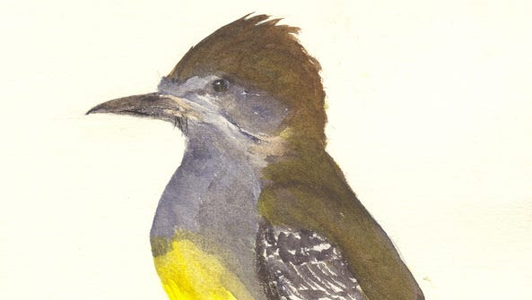 Great-crested flycatchers will start arriving soom