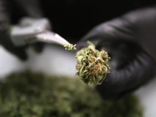Marijuana buds.