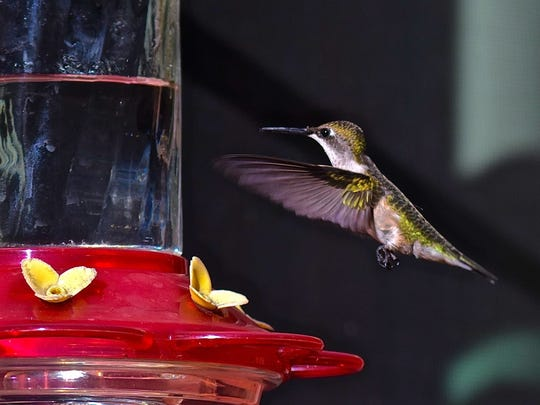 Hummingbirds dart all over the grounds at the Hummer House in Christoval.