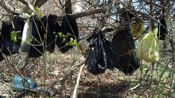 Photo of dead cats in bags found in a wooded area off of overlook terrace on April 24, 2014 in Yonkers.