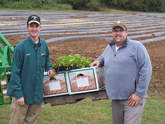 Brandon and Phillip Chambers have planted about 45,000