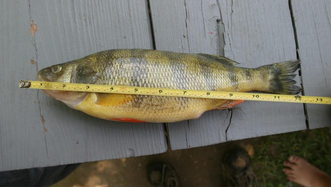 Fish from Lake St. Clair are subject to a state consumption advisory.