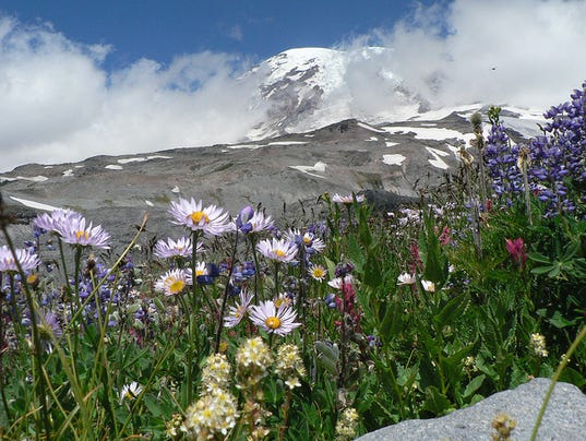 635963141880100206-Mount-Rainier-s-Wildflowers-credit-NPS-Photo-by-Jasmine-Horn.jpg