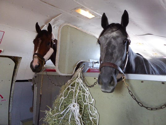 636130738482717107-Horses-flying-on-Air-Horse-One-in-October-2016-munched-on-hay-during-their-trip.-Photo-Harriet-Baskas.JPG