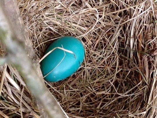 636235315409520135-LDN-DW-022617-blue-egg.jpg