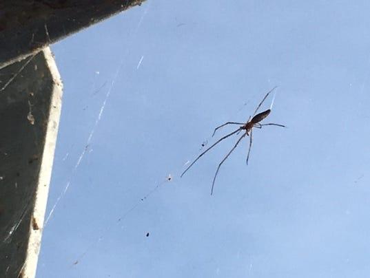 636380501350330448-spider.jpg