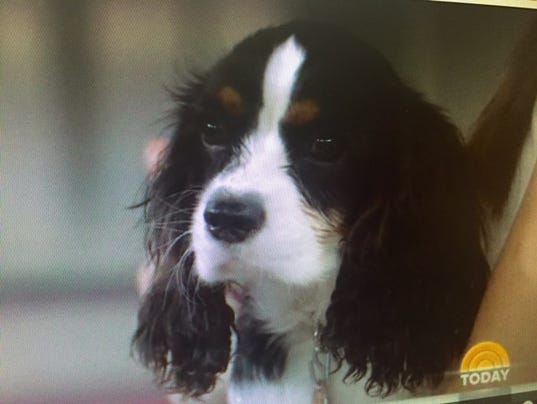 Green Bay Dog Rescue