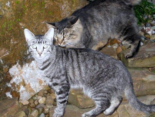 Cut Cats Courier Address