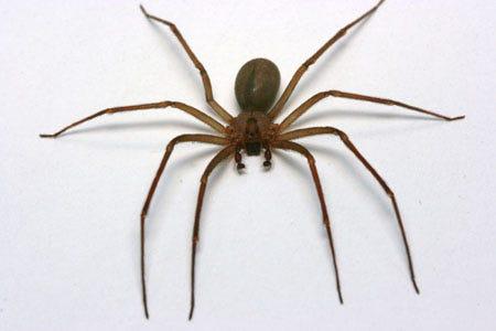 Gallery of Dangerous Spider Bite Photos - Verywell