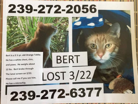 Bert is missing from Ibis Cove on Immokalee Road.