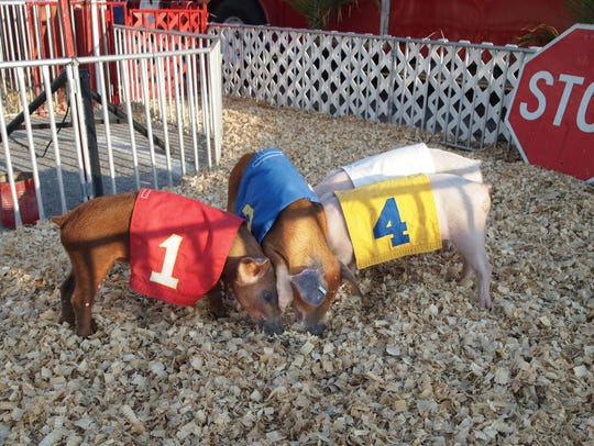 The Racing Pigs are a perennial favorite at the Tennessee