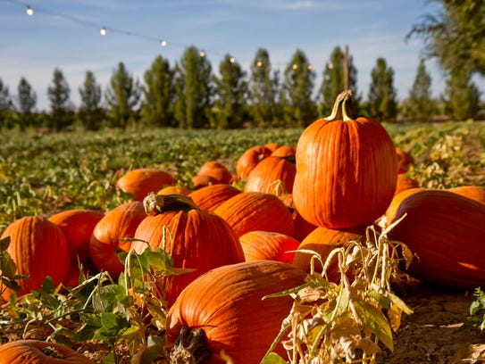 A corn maze, hayrides and chili are among the attractions.