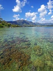 The coral reef in this watershed in Kaneohe Bay, Oahu, Hawaii, could struggle to adapt to climate extremes.