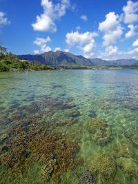 Coral reefs, such as those shown in this watershed in Kaneohe Bay, Oahu, Hawaii, could have a difficult time adapting to future climate extremes, says a study Oct. 9, 2013 by the University of Hawaii, Manoa.