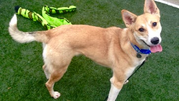 A dog named Ramlah recently completed the American Society for the Prevention of Cruelty to Animal's rehabilitation program in New Jersey and is now up for adoption. The ASPCA has started construction on a $9 million, 35,000-square-foot animal behavior rehabilitation center in Weaverville where it intends to use innovative, scientifically-based training and behavior practices to help abused dogs become socialized again to humans.