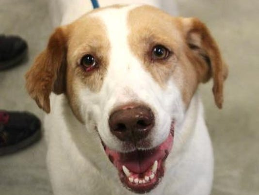 636402150435238196-NEW-0906-Pet-of-Week-Claire.jpg