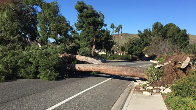 A tree fell in Thousand Oaks on Saturday morning during a strong Santa Ana wind event.