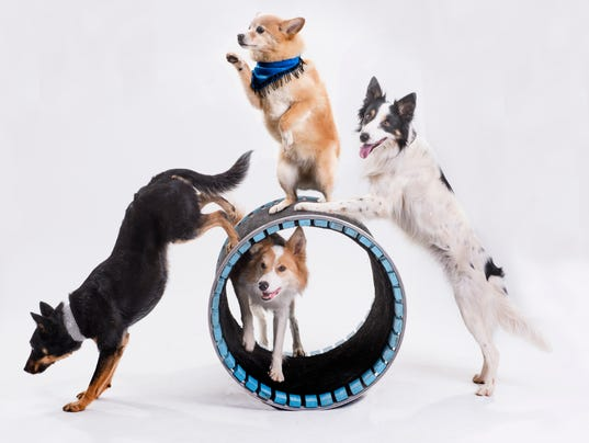 636565408758620198-4-Dog-Barrel.jpg