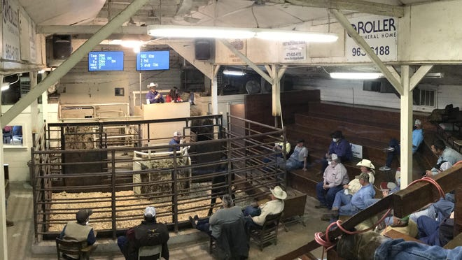 Cattle ranchers from the area continue to gather at the County Line Sale Barn each Wednesday for a live cattle auction. Auctioneer Brandon Sing and clerk Kallie Bonds are seen working the auction on Wednesday, Nov. 18, 2020. The County Line Sale Barn, 11165 West State Highway 22 in Ratcliff, will be closed today, Nov. 25, 2020, for the Thanksgiving holiday, but will resume business on Dec. 2.