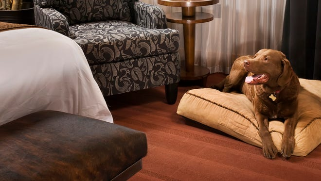 The Iron Horse Hotel's Big Dog package includes an oversize in-room pet pillow, food and water bowls and dog treats.