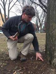 Burlington City Arborist V.J. Comai indicates symptoms of root constriction at the base of a tree in City Hall Park on Friday, Feb. 23, 2018.