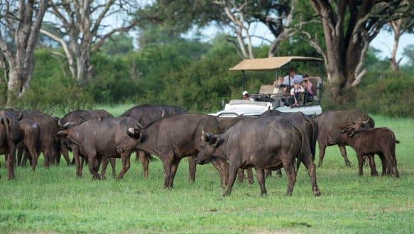 Gift of travel Wilderness Safaris Davison's camp ZimbabweOEVANS-2763