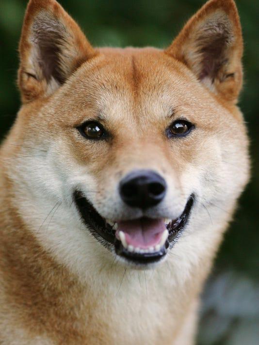 MOR 1014 dog grab