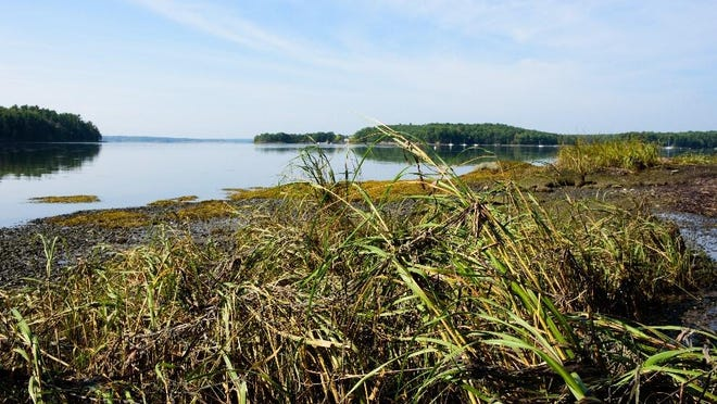 Eversource has been recognized by the Environmental Business Council of New England for its commitment to safeguarding the ecological health of Little Bay, an environmentally sensitive estuary located in Durham and Newington.