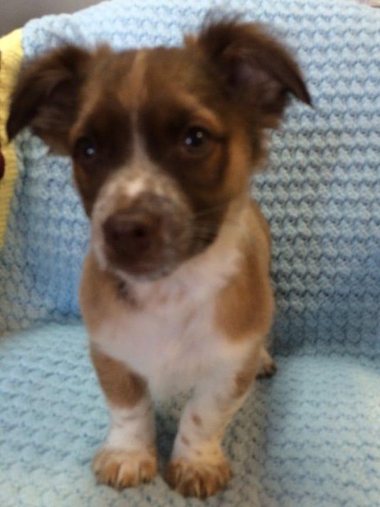 636300522568822435-thumbnail-adoptable-Butch.jpg