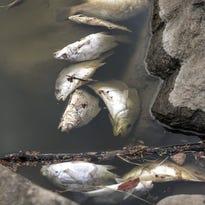 Lake Winnebago sheepshead possibly killed by VHS