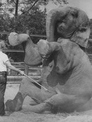 Jim Paintiff works with Henrietta the Indonesian elephant at the WNC Nature Center in 1980. Henrietta lived at the Nature Center for nearly 30 years before dying in 1982.